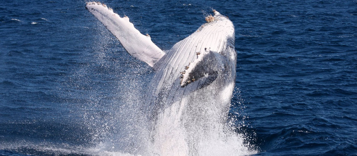 Augusta Whale Watching Tours