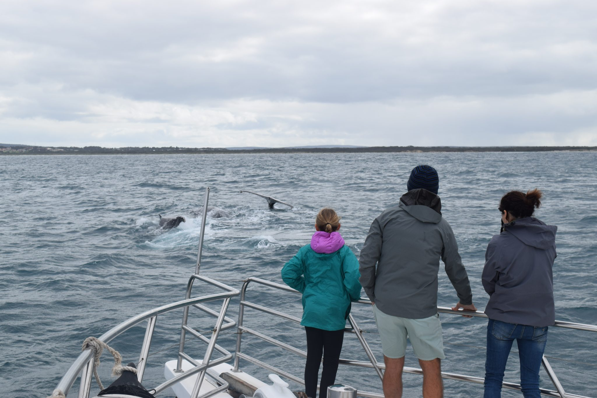 whale watching Perth