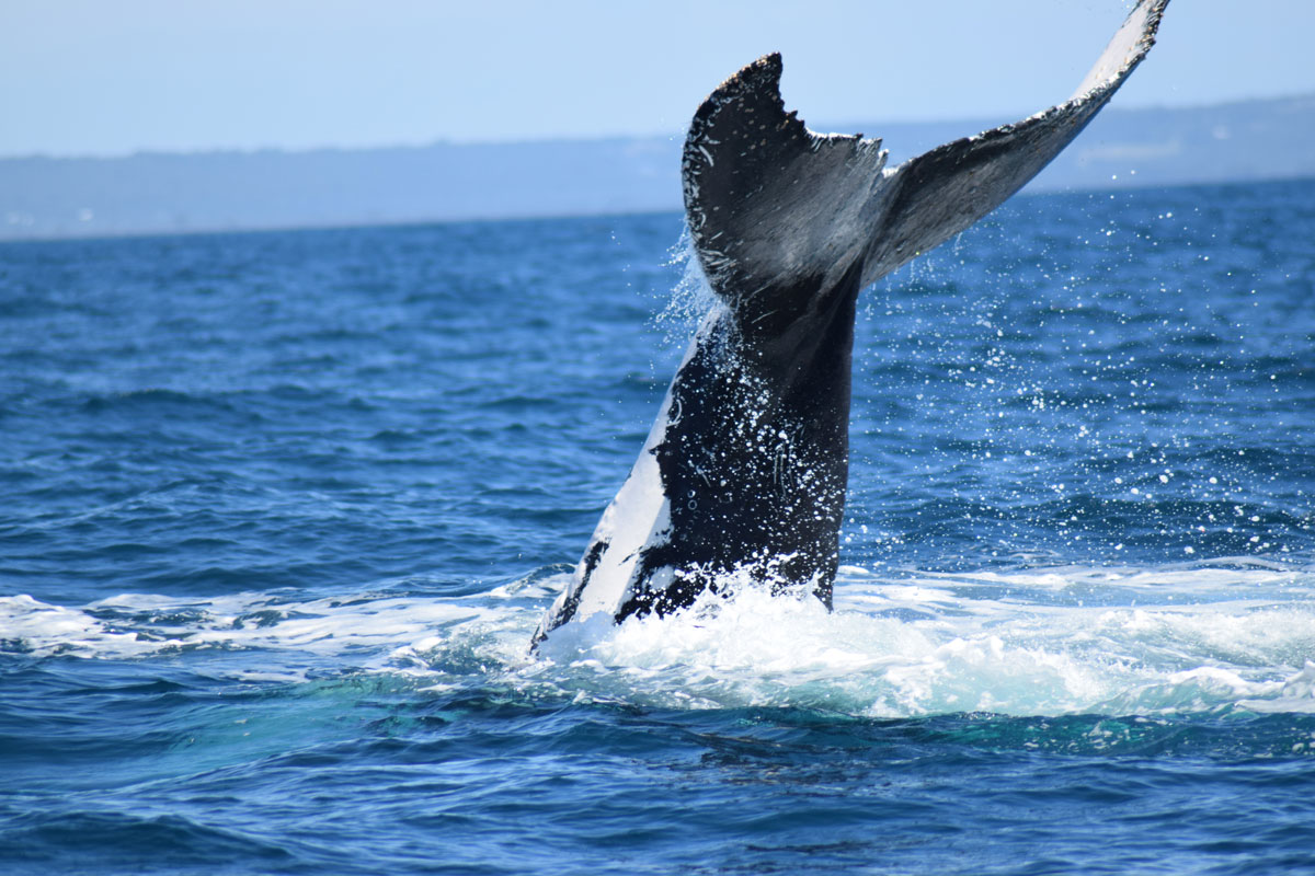 whale watching cruises Perth