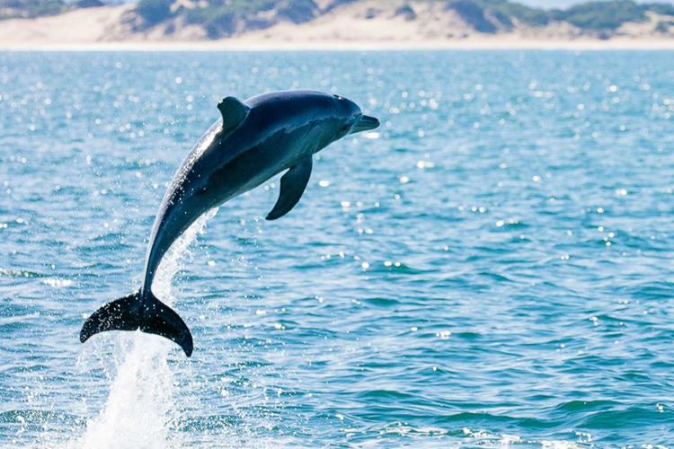 dolphin-stock-gty-jef-180827_hpMain_4x3_992