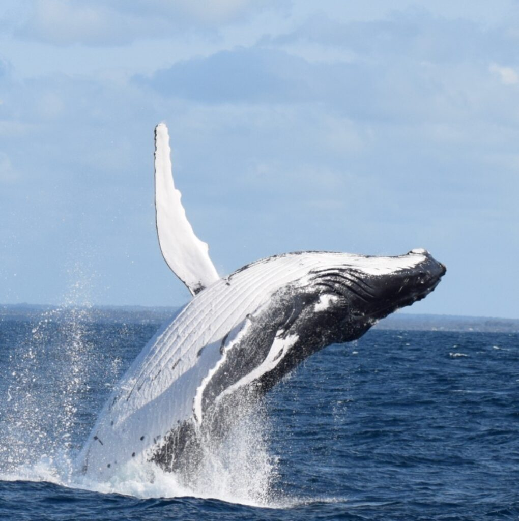 Whale Watching Tour in Busselton