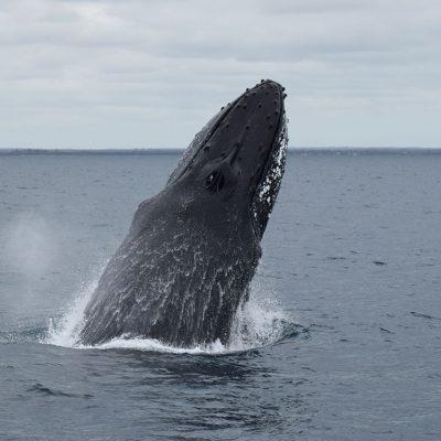 whale watching dunsborough